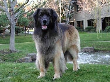 Auf den Hund gekommen (Bild: googleblog.blogspot.de)