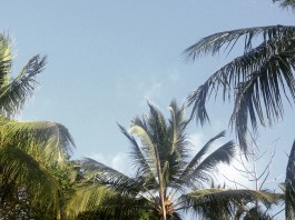Palmen vor blauem Himmel