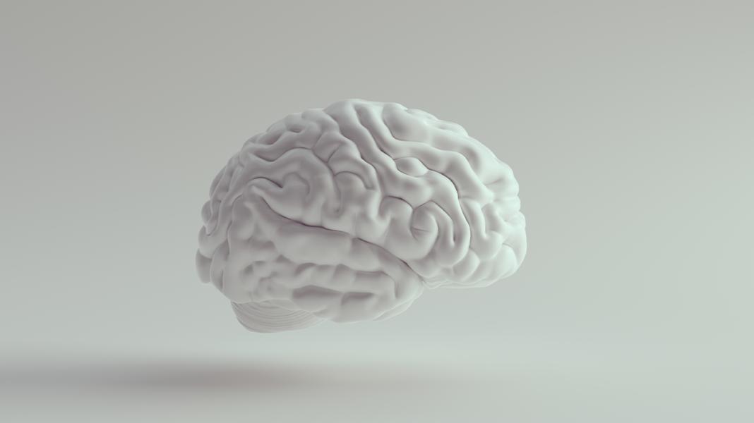 Neurowissenschaften in digitaler Form